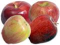 CT Apple Farms