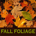 CT Fall Foliage Drives