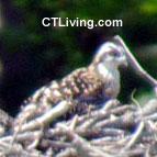 CT Birding